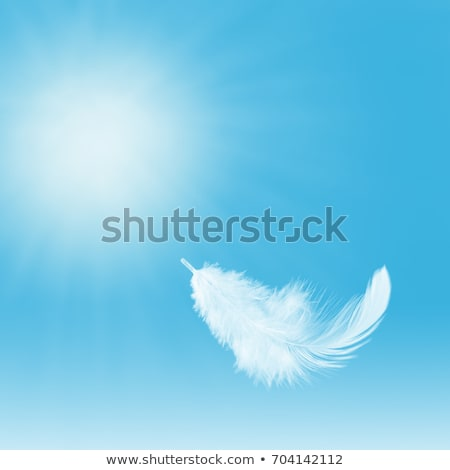 white feather on blue Stock photo © morrbyte