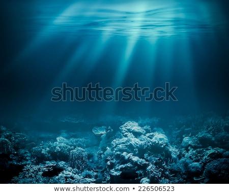 Mély tenger élet illusztráció hal világ Stock fotó © DzoniBeCool
