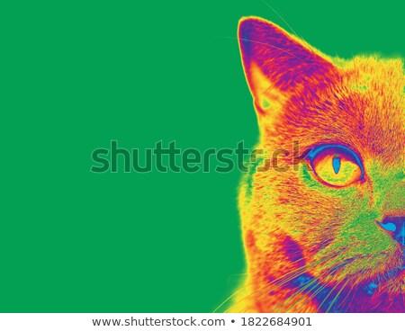Cat Head Thermal Imaging Stock photo © Suljo