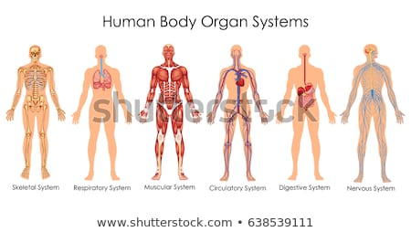 Сток-фото: человека · скелет · сердце · красный · синий · нормальный