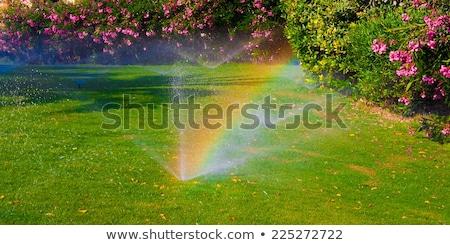 Borrifador arco-íris campo de golfe luz solar spray efeito Foto stock © searagen