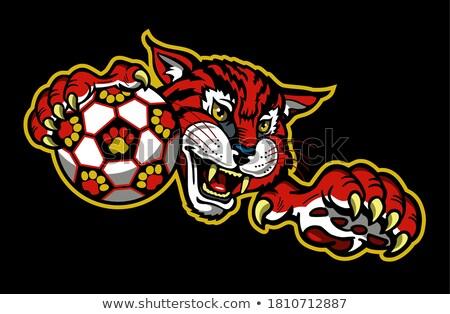 дикая кошка Футбол футбола мяча талисман Сток-фото © Krisdog