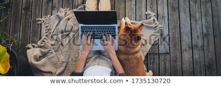 онлайн банковской баннер изображение кредитных карт ноутбука Сток-фото © Genestro