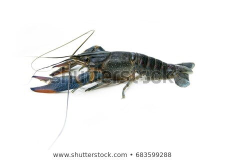 Stock photo: Set of lobster on white background