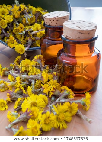Fresh coltsfoot (Tussilago farfara) flowers with coltsfoot tea Stock photo © madeleine_steinbach