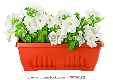 Flower Pot with Ground, Container Soil for Plant Stok fotoğraf © robuart