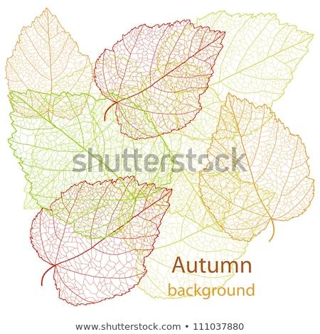 outono · padrão · vermelho · amarelo · folhas · verdes - foto stock © beholdereye