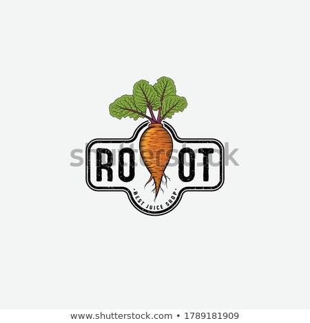 収穫 製品 野菜 ルート ベクトル ストックフォト © robuart