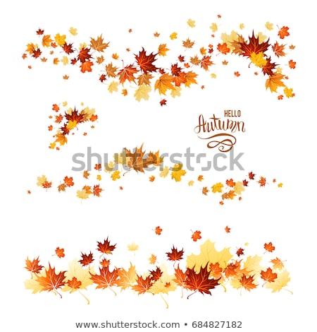 ősz ősz levelek őszi levelek fehér textúra Stock fotó © ajn