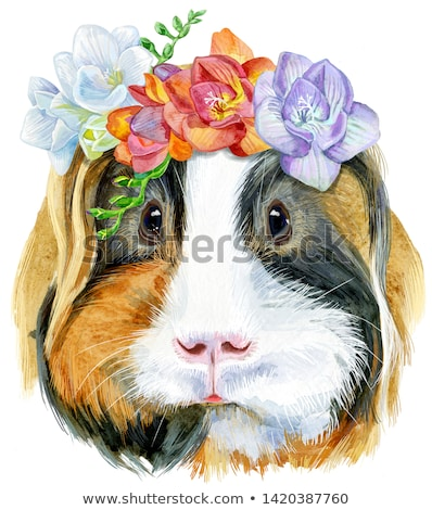 Watercolor portrait of Sheltie Guinea Pig with freesia wreath on white background Stock photo © Natalia_1947