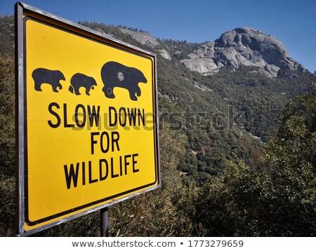 Alaska zielone znak autostrady wysoki graficzne Zdjęcia stock © kbuntu