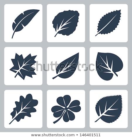 Lime-tree leaves Stock photo © vtorous