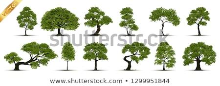 elma · ağacı · siluet · beyaz · düzenlenebilir · gökyüzü · doğa - stok fotoğraf © orson
