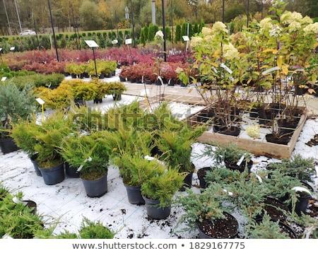 plants in garden center stock photo © simply