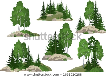 conifer forest Stock photo © smithore