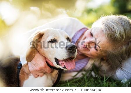 supérieurs · dame · chien · drôle · ensemble - photo stock © photography33