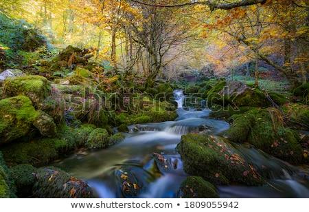 Najaar kreek weinig bladeren houten voetbrug Stockfoto © ondrej83
