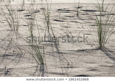 sombra · metade · manhã · sol · paisagem - foto stock © elxeneize