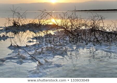 bush · zout · shot · zout · dode · zee - stockfoto © eldadcarin