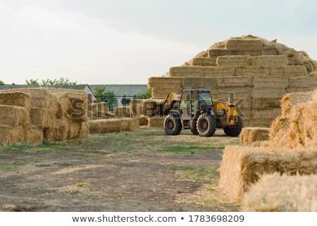 colheita · tempo · inglaterra · ver · inglês · campos - foto stock © sarahdoow