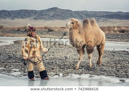 Portrait of a Mongolian camel Stock photo © w20er