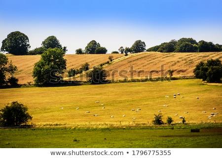 Schilderachtig velden Engeland landschap boom Stockfoto © jayfish