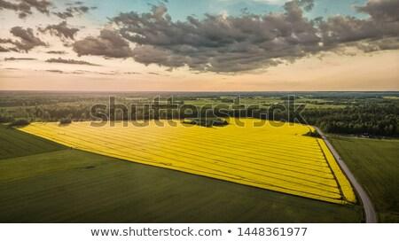 Gyönyörű tájkép nemi erőszak mező drámai felhőkép Stock fotó © meinzahn