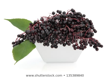 elder berries in a bowl stock photo © spectral