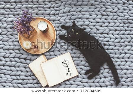 黒猫 白 猫 黒 脂肪 ストックフォト © cynoclub