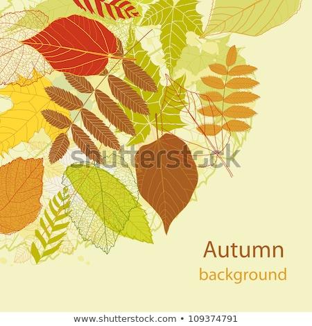 孤立した · 樫の木 · 下がり · 葉 · ツリー · 森林 - ストックフォト © beholdereye
