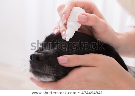 vet applying eye drop in dogs eye stock photo © andreypopov