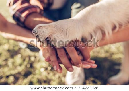 собака · лапа · человеческая · рука · изолированный · белый - Сток-фото © oleksandro