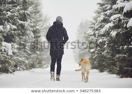 wandelen · schoenen · sneeuw · natuur · metaal · veld - stockfoto © stevanovicigor