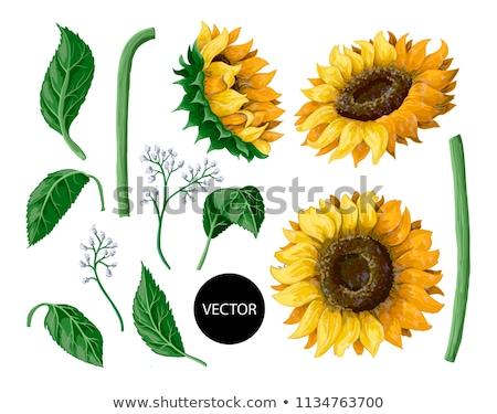 Sammlung · Blume · Blätter · Vektor · Hand · gezeichnet - stock foto © olllikeballoon