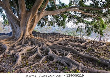 Groene boom groeiend ondergrondse illustratie boom blad Stockfoto © colematt