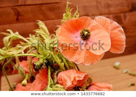 haşhaş · çiçek · bahar · bahçe · yeşil - stok fotoğraf © sarahdoow