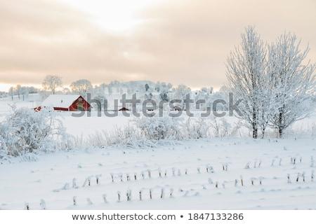 çiftlik sahne doğa ahır örnek ev Stok fotoğraf © bluering