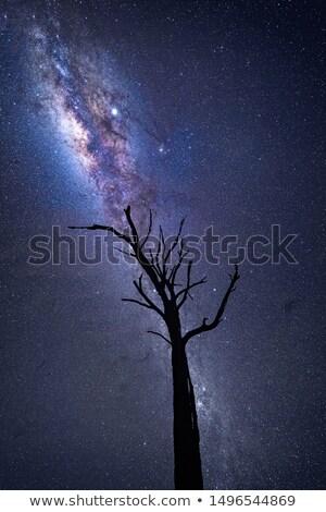 mleczny · sposób · wszechświata · Australia · gwiazdki · nieba - zdjęcia stock © lovleah