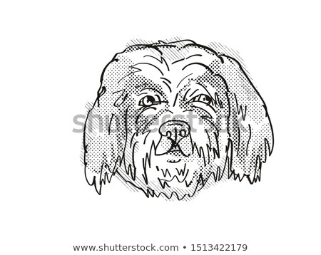 Cavachon  Dog Breed Cartoon Retro Drawing Stock photo © patrimonio