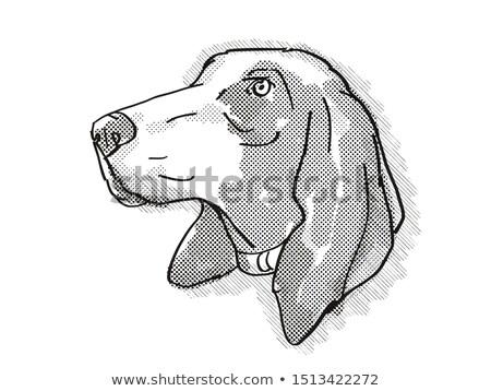 Bracco Italiano Dog Breed Cartoon Retro Drawing Stock photo © patrimonio