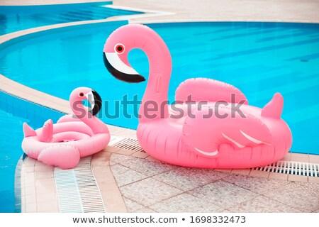 家族 見 2 ピンク フラミンゴ インフレータブル ストックフォト © Victoria_Andreas