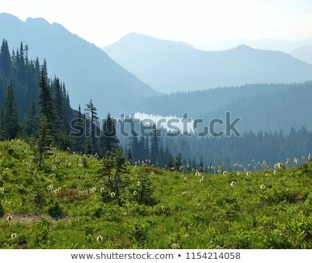 Füves park fa sziluett hegy tó Stock fotó © Frankljr