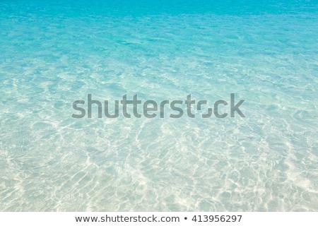 Tropikal sualtı örnek yalıtılmış beyaz balık Stok fotoğraf © dayzeren