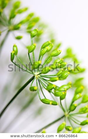 mavi · çiçek · detay · mavi · çiçekler · ışık · güzellik - stok fotoğraf © nailiaschwarz