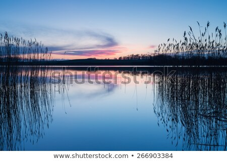 Summer, the reeds on the background of water stock photo © Borissos