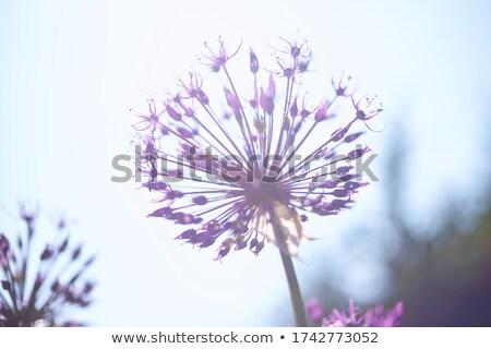 thistle in blurred background stock photo © gewoldi