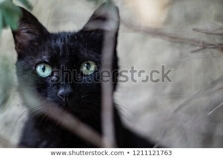 close up portret black and white cat stock photo © zhukow
