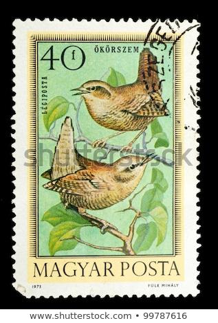 Wild birds on old stamps - Hungary - circa 1973 Stock photo © samsem