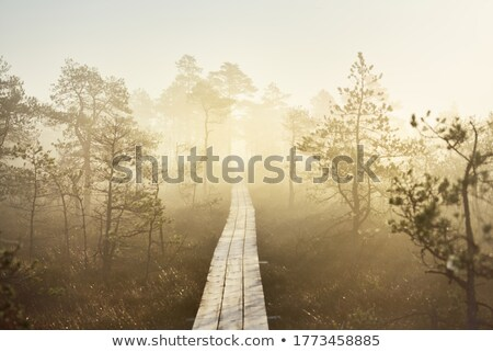 Wooden pathway Stock photo © Stootsy