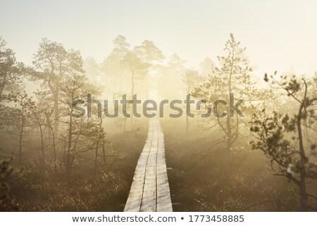 wooden pathway stock photo © stootsy